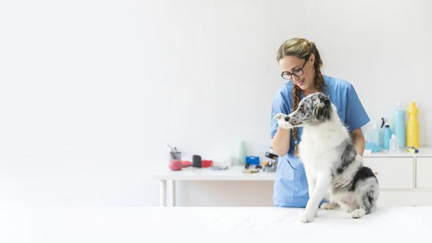 Qual o melhor regime tributário para pet shop e clínica veterinária?